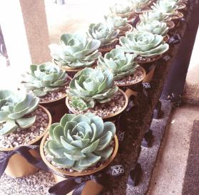Painted Succulent Plants